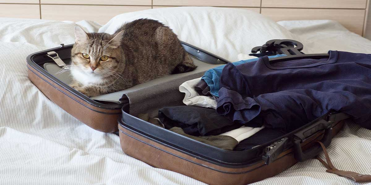 A cat getting ready to immigrate to the US